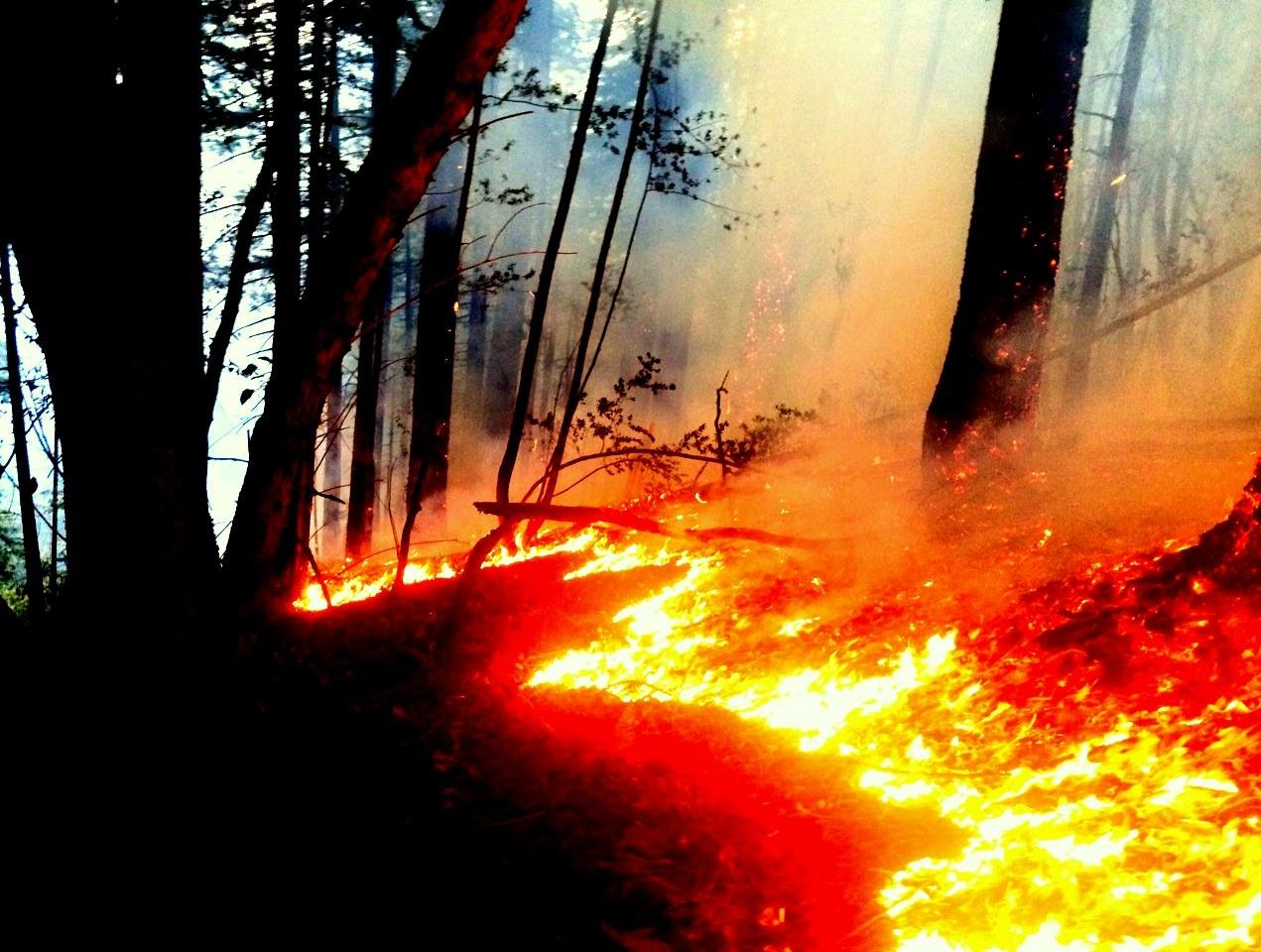 Ross Valley Firefighters Assist with San Geronimo Wildfire